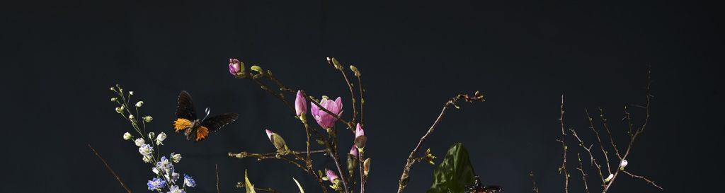 Amsterdam's most beautiful flowers - URBANBLOOM