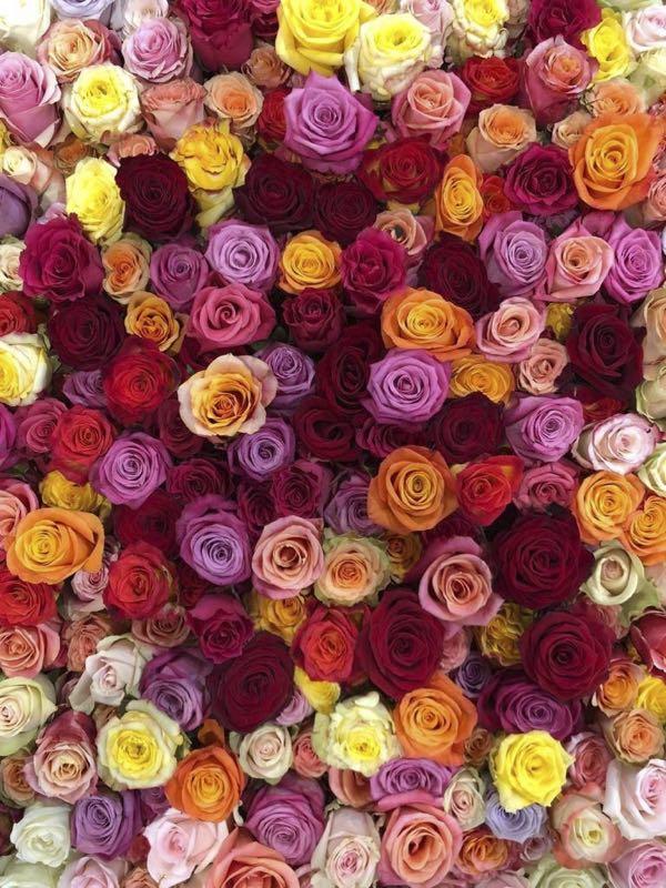 Een mix van rozen met allerlei kleuren