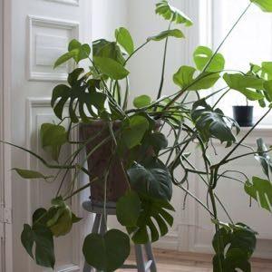 Een foto van een groene kamerplant
